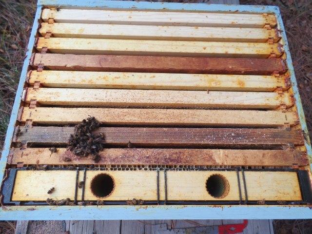 dead hive