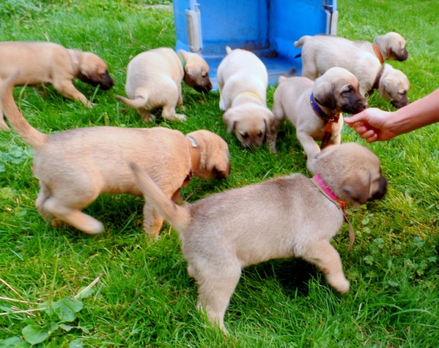 In the back row from left to right: light pink, green, yellow, dark blue, black, orange. Front two pups are light blue and hot pink.